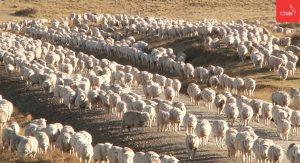 grupo de oveja   Toolkit   Marca Chile